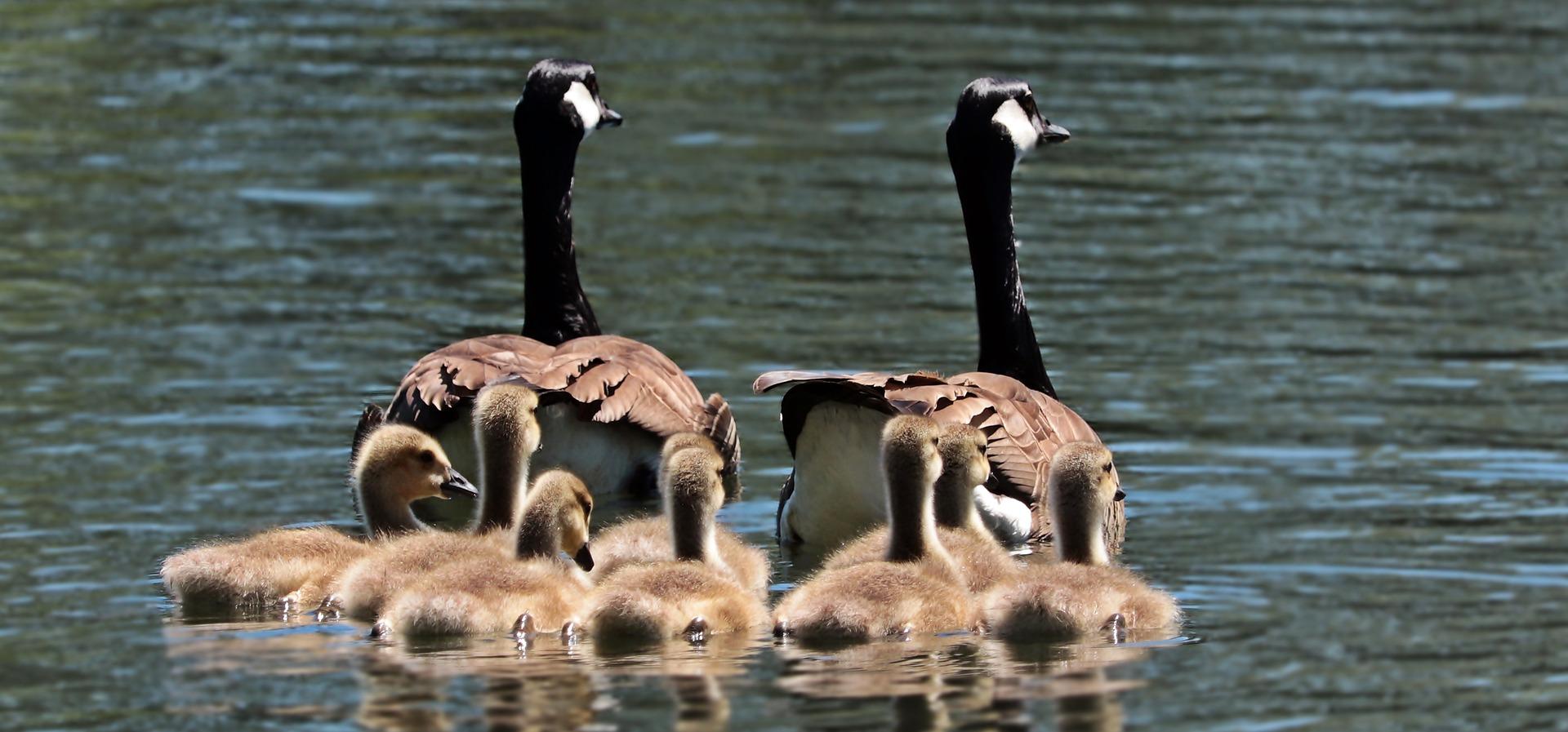 Familieopstelling met kinderen